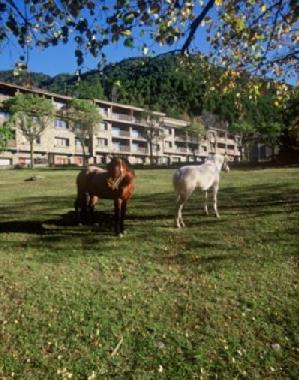 Horses in front the apartments