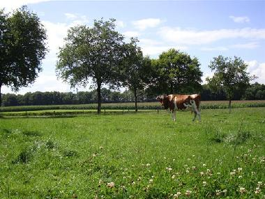 Holiday House in Winterswijk-Woold (Gelderland) or holiday homes and vacation rentals
