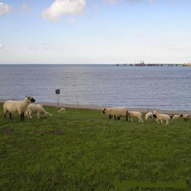 Holiday Apartment in Hooksiel (Nordsee-Festland / Ostfriesland) or holiday homes and vacation rentals