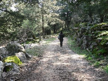 do you enjoy hicking ? paths will take you to a magnificent journey in the woods
