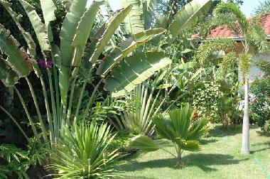 Beautifull tropical garden