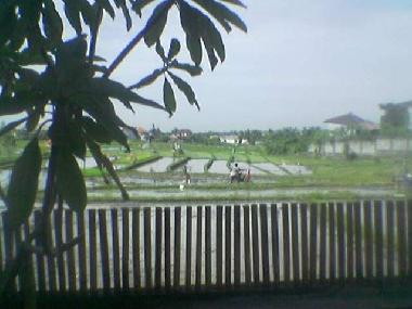 view on sawah from ground floor bedroom