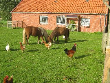 Holiday Apartment in Norden-Leybuchtpolder (Nordsee-Festland / Ostfriesland) or holiday homes and vacation rentals