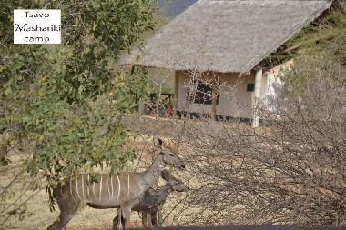 Kudu and baby kudu from the restaurant of Masahriki camp