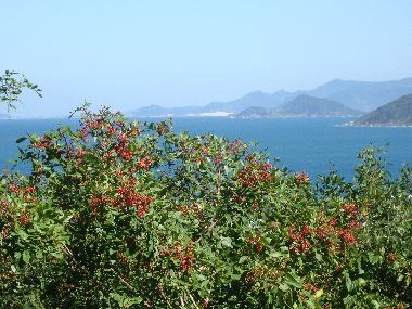 Chalet in florianopolis (Santa Catarina) or holiday homes and vacation rentals