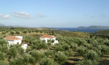 2 villa overview in olive grove