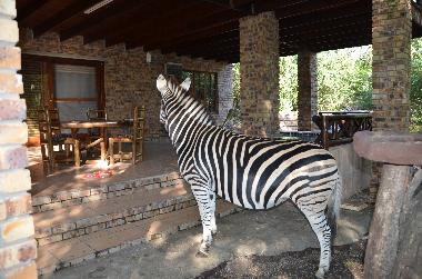 Villa in Marloth Park (Mpumalanga) or holiday homes and vacation rentals