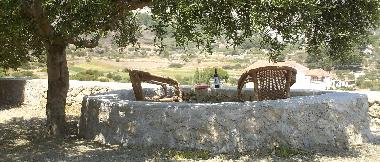 Take a book, a glass of wine and enjoy under the olivetree